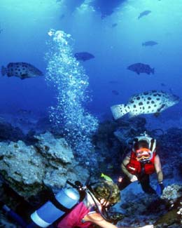 Reef Diving On Cozumel Beach
